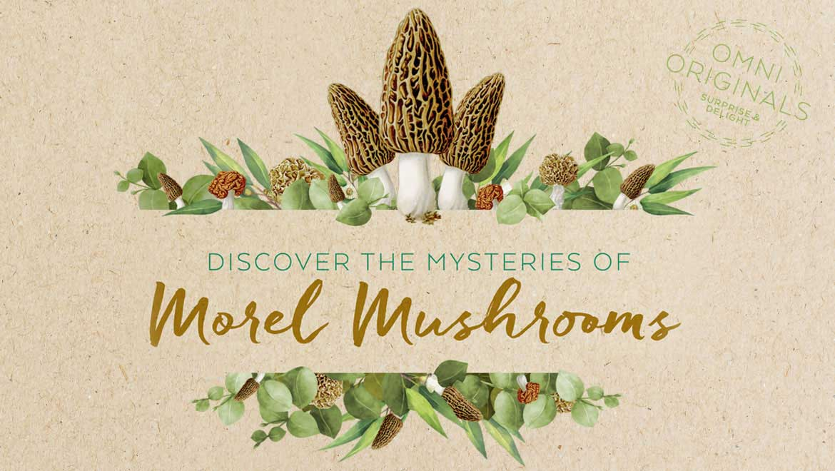 Discover the Mysteries of Morel Mushrooms