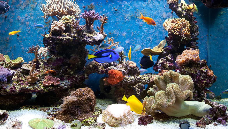 How to Use Shedd Aquarium Coupons