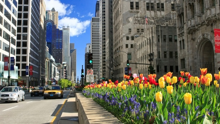 Magnificent Mile Street View