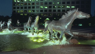 Horses of Las Colinas Texas