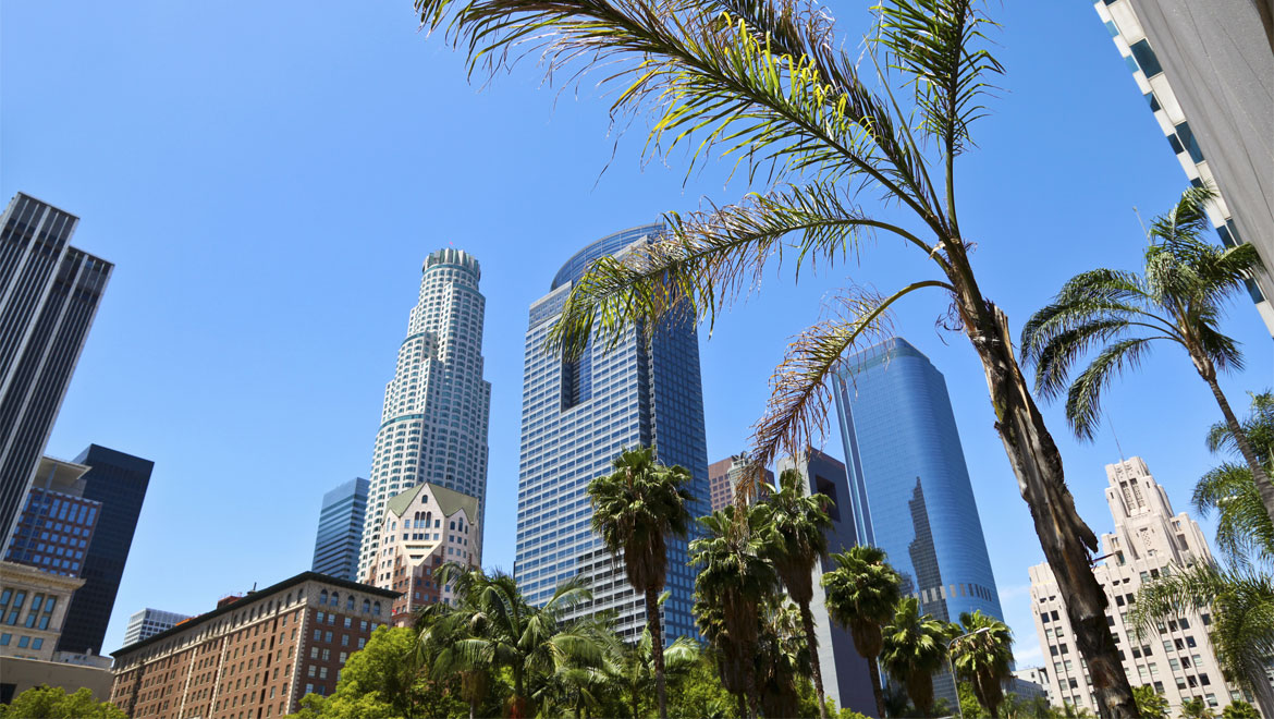 Los Angeles with palm tree