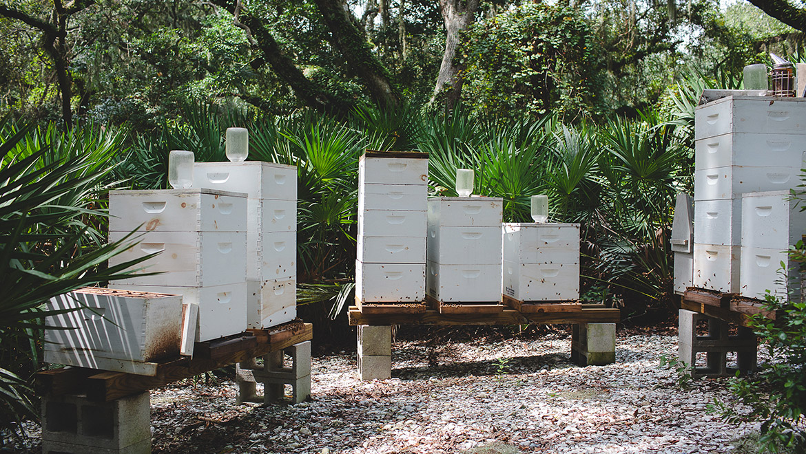 Sprouting Project Apiary Wide