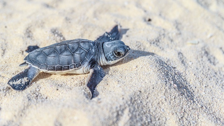 Cancun Turtle Program