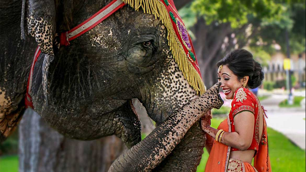 Bride with elephant