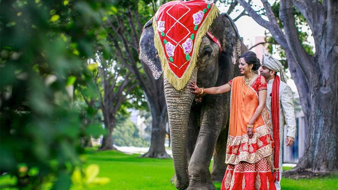 Bride and Groom with elephant on wedding day
