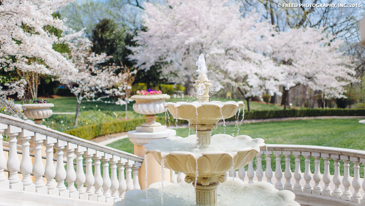 Cherry blossoms next to fountain at Omni Shoreham Hotel