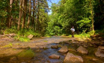 Spring in Virginia: The Omni Homestead Resort