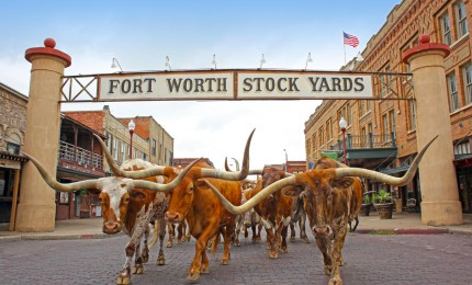 Best Staycation Cities: Fort Worth