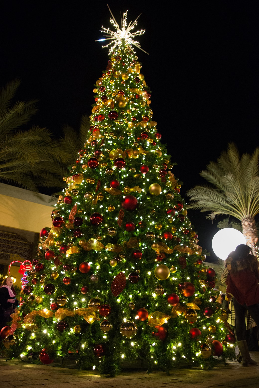 Scottsdale Christmas Trees