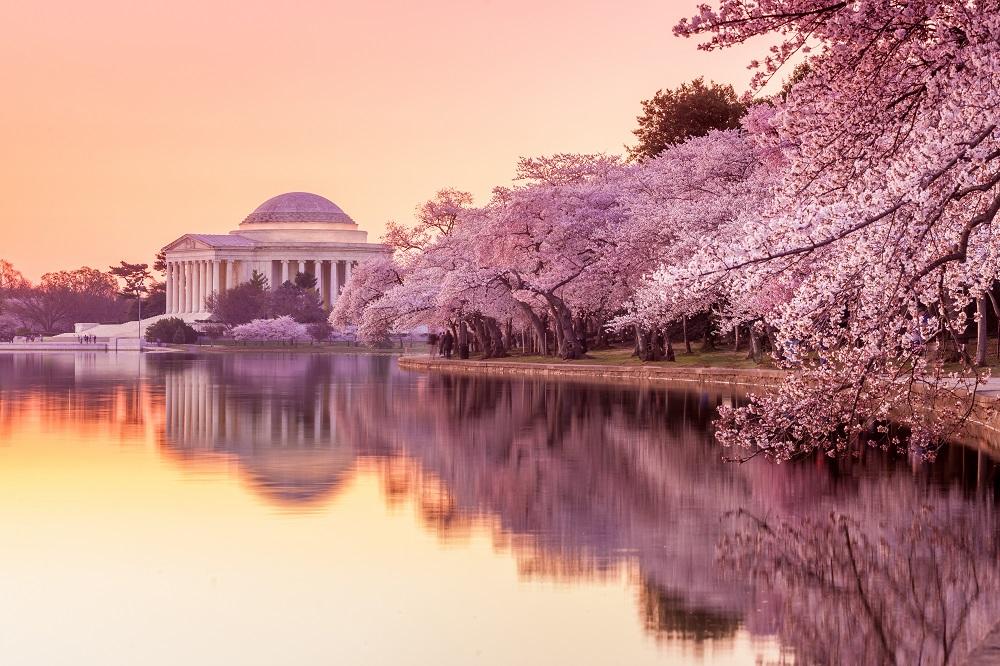 Proposal Spot in Washington D.C.