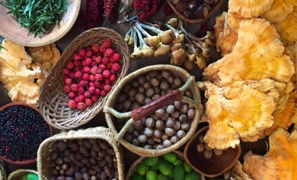 Asheville's Wild Food Foraging Tour