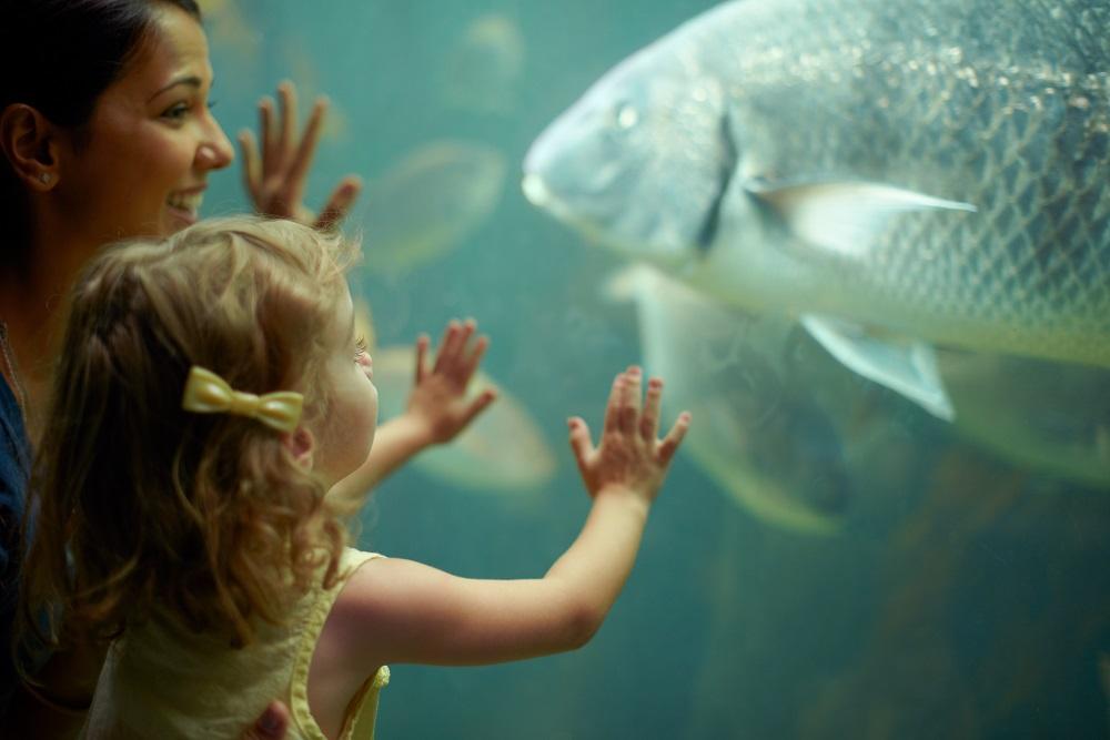 mother daughter looking inside aquarium tank