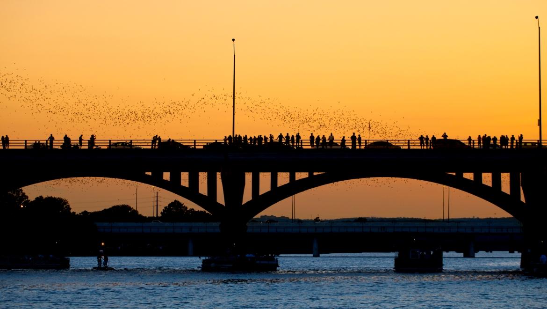 congress street bridge bats flying
