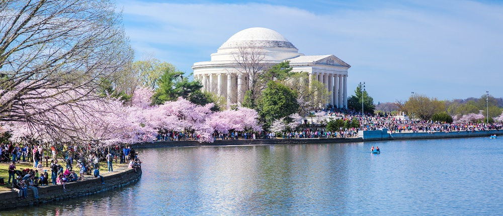 The Jefferson Memorial and Tidal Basin with cherry blossoms in full bloom.