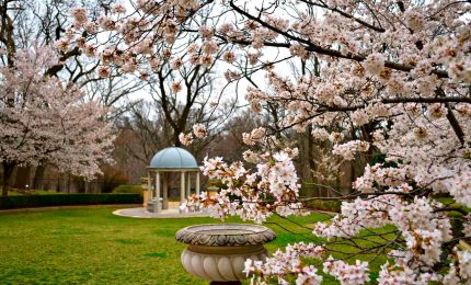 What To Do in Washington D.C. This Spring