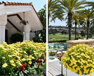 Yellow flowers outside of hotel with view of golf course