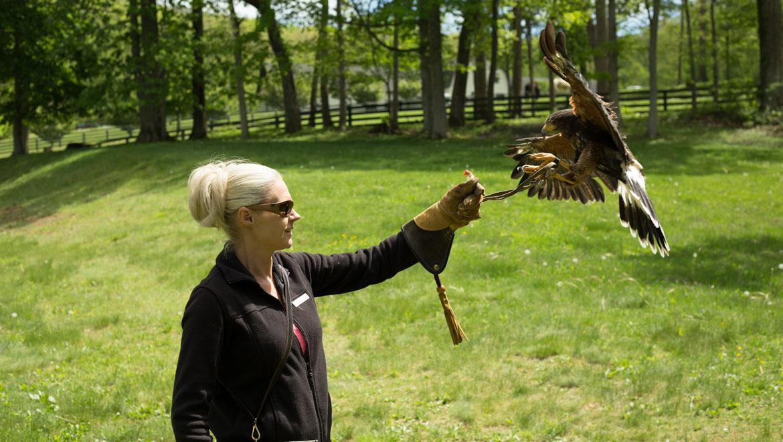 Falconry at The Omni Homestead Resort
