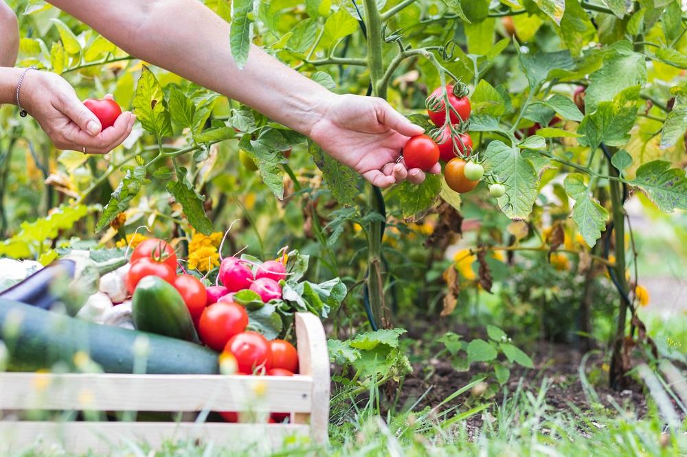 Outdoor Activity - Gardening